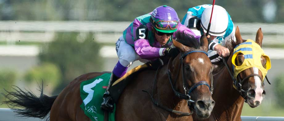 2016 Dixiana Elkhorn Stakes Preview, Entries & Odds