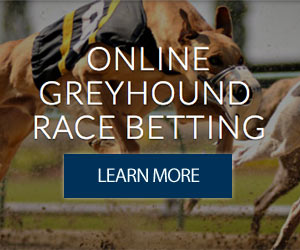 Greyhound Betting