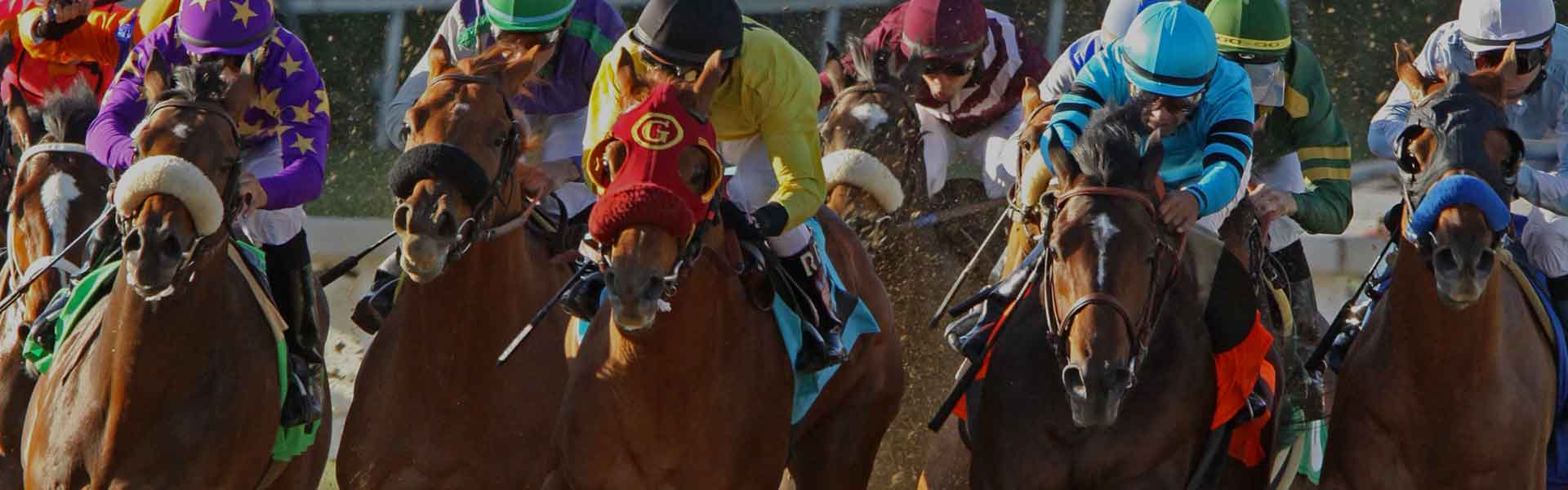 Horse Betting News