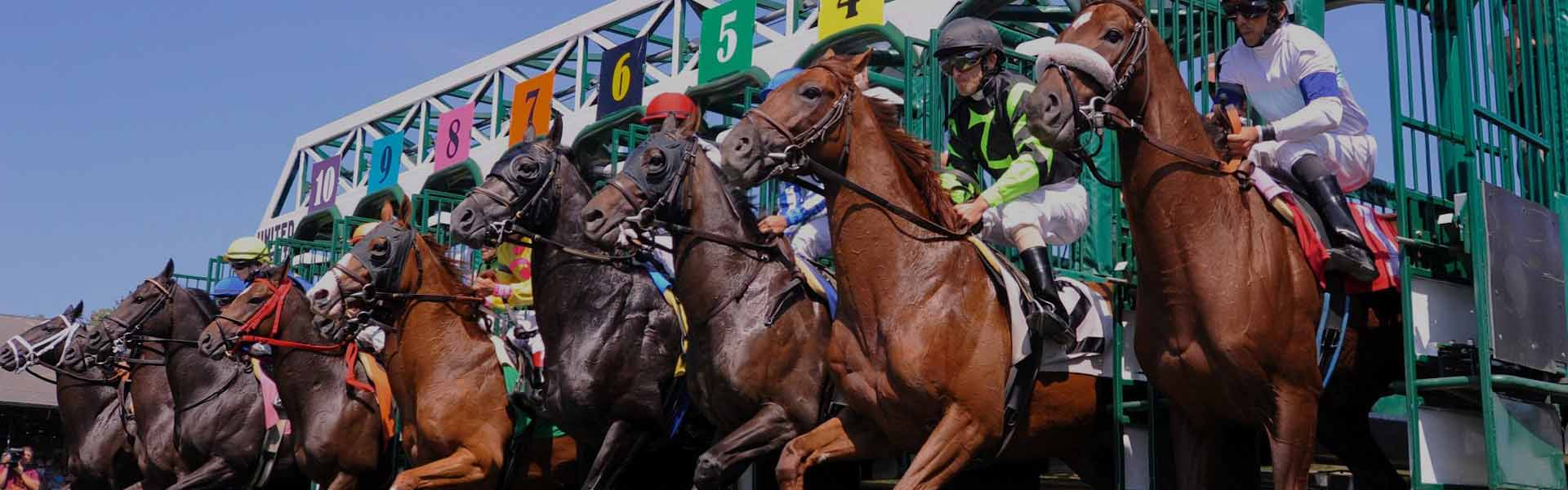 Greyhound racing betting online sports betting and casino online