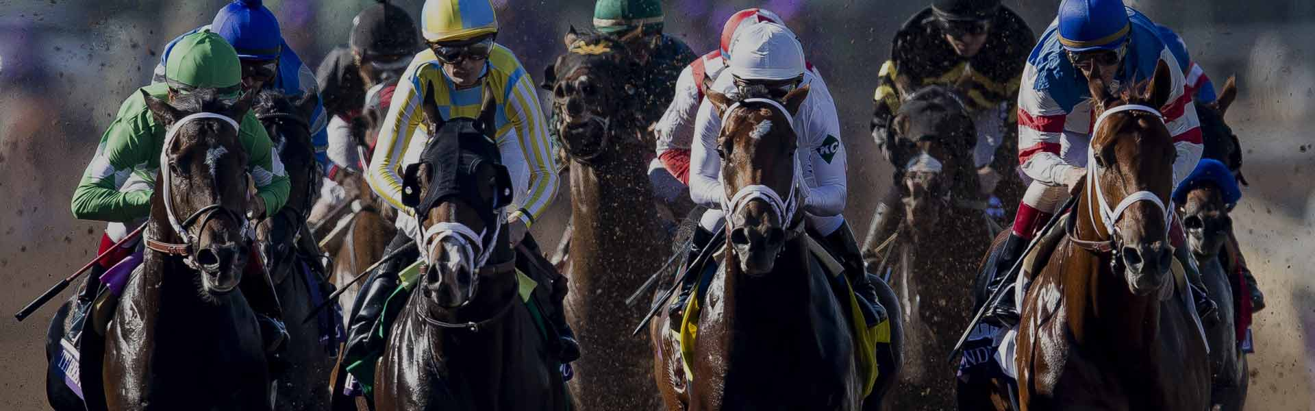 Breeders' Cup Classic Contenders