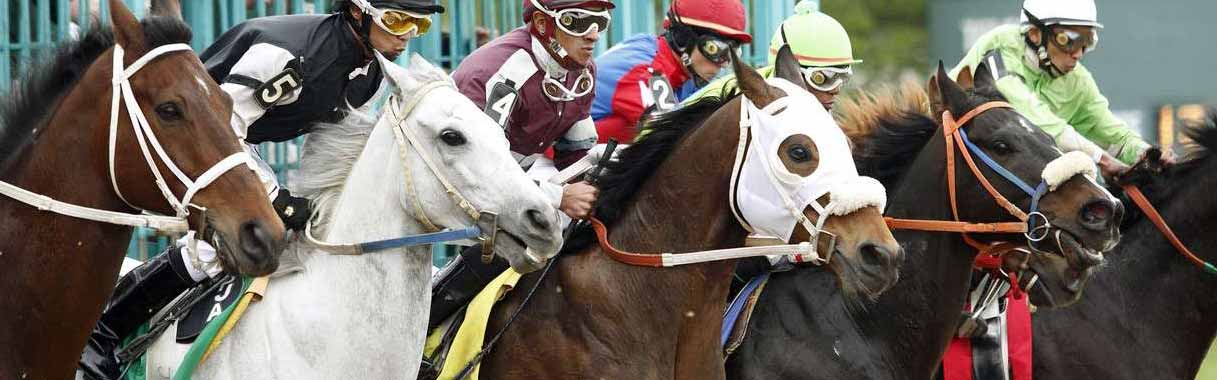Tremont Stakes 2019: Entries & Odds at Belmont Park | OFF
