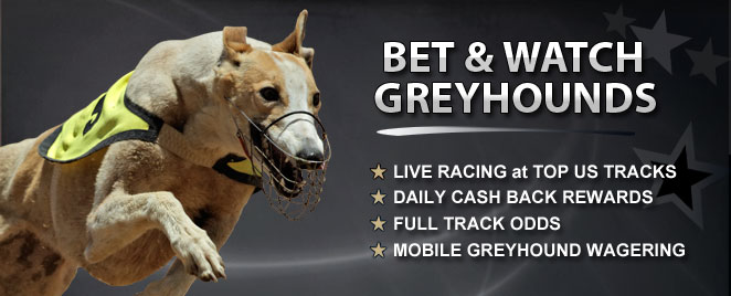 greyhound racing betting terms